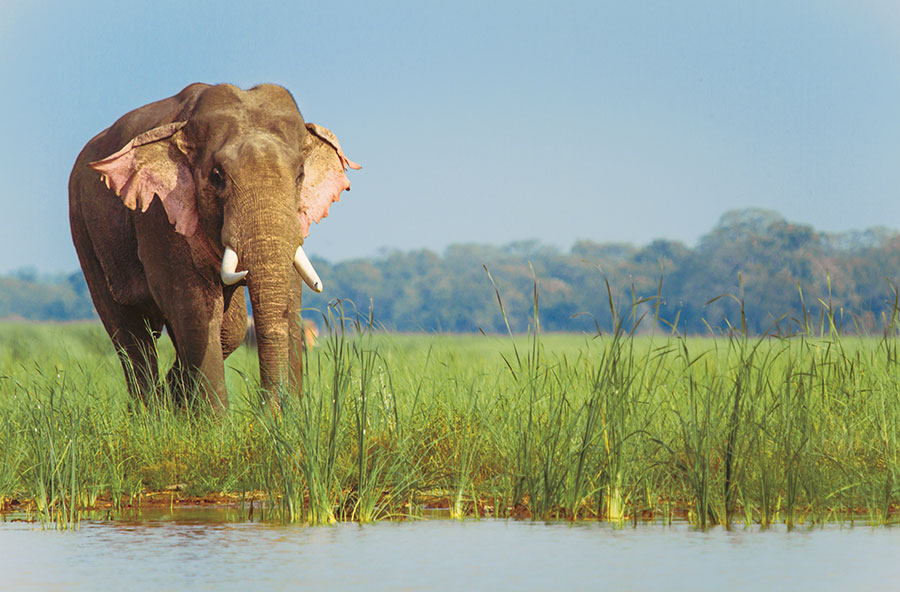Ein Elefant bei der Ultimate Travelling Camp Jaagir Lodge.